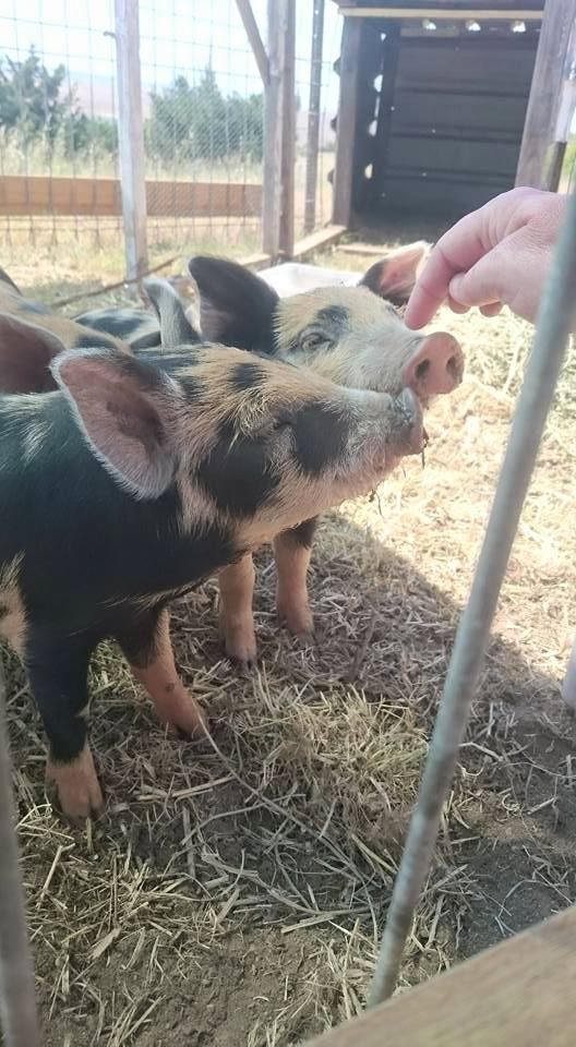 A Piggy Post